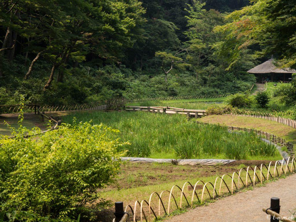 Le parc du sanctuaire Meiji-Jingû - Tokyo